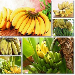 9 benefici della Banana