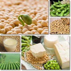 Proprietà soia e latte di soia