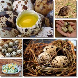 Proprietà uova di quaglia
