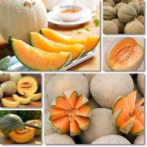 7 benefici del Melone