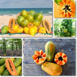 Papaya – Proprietà e benefici