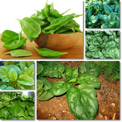 Proprietà nutrizionali spinaci