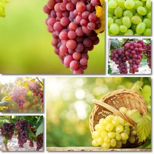 Proprietà uva bianca e uva rossa