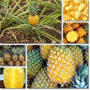 Proprietà nutrizionali Ananas