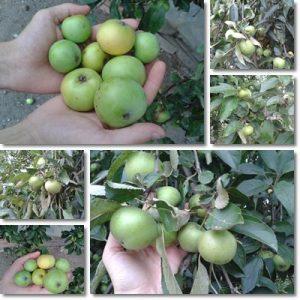 Proprietà della mela