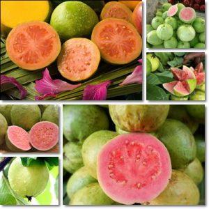 Proprietà guava