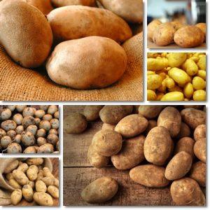 Proprietà patate