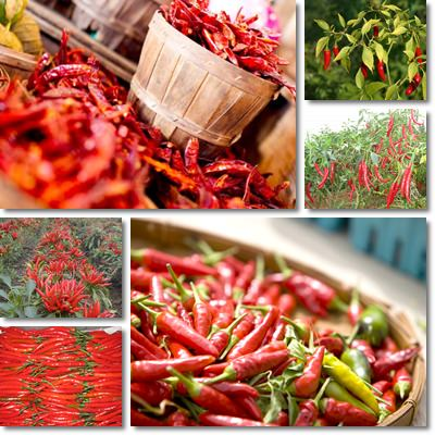 Proprietà peperoncino rosso