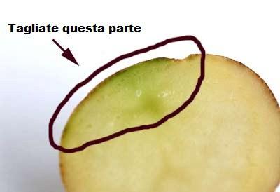 patata verde