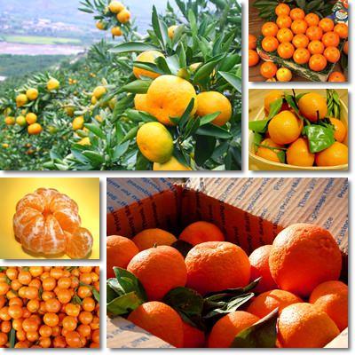Proprietà e benefici Mandarino