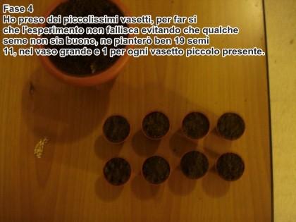 semina melograno 4