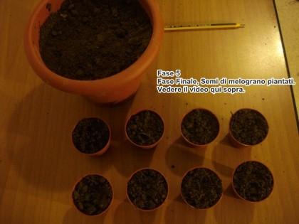 semina melograno 5