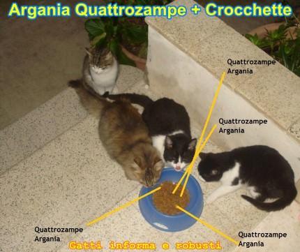 Argania Quattrozampe Gatti