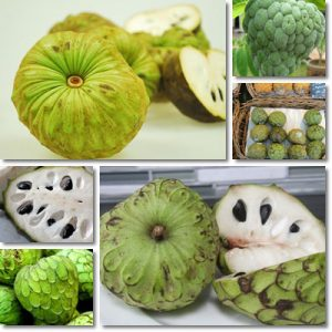 Proprietà e benefici Cherimoya