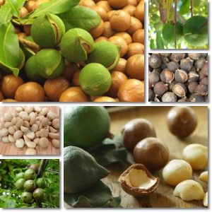 Proprietà e benefici Noci Macadamia