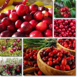 Proprietà e benefici Ossicocco Cranberry