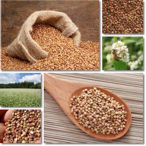 Proprietà e benefici grano saraceno