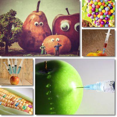 OGM, Organismi geneticamente modificati