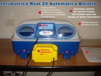 Real 24 Automatica Borotto