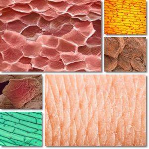 5 Cibi per una pelle sana