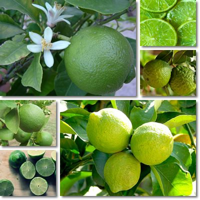 9 benefici del Lime