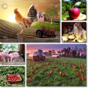 Perchè vivere in campagna