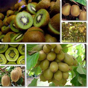 7 benefici del Kiwi