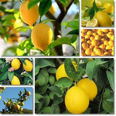 7 benefici del Limone