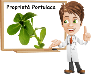 Portulaca