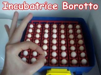 Real 49 uova borotto