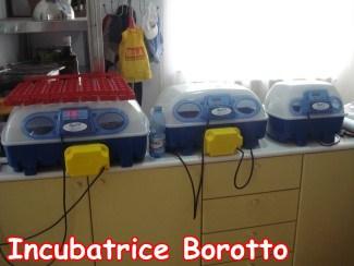 Incubatrici Borotto