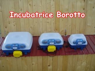 Incubatrice Borotto