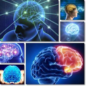 10 alimenti per il cervello