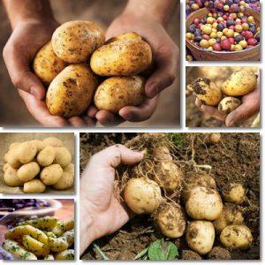 10 Benefici della patata