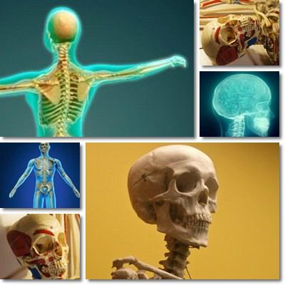 Vitamine e minerali per le ossa