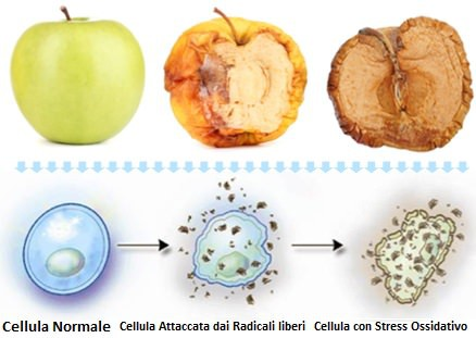 Stress ossidativo cellula