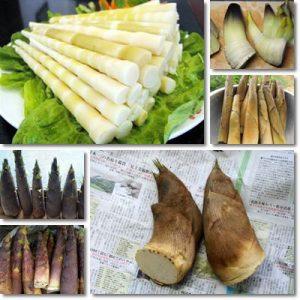 Proprietà e benefici germogli di Bambù