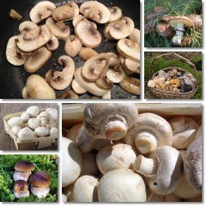 Proprietà e benefici funghi