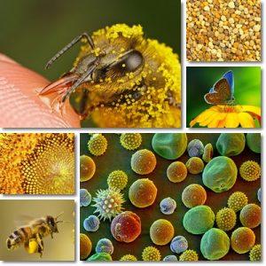 Rimedi naturali allergia pollini