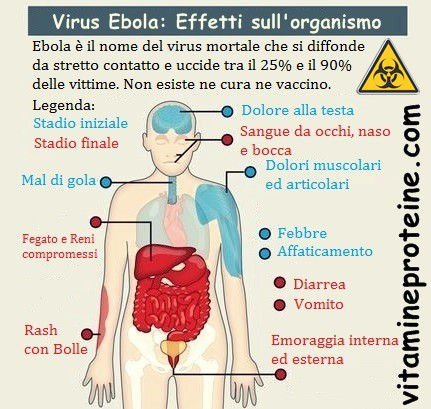 Grafico virus ebola