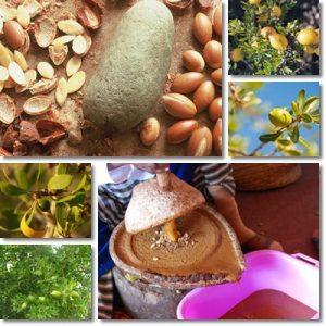 Proprietà e benefici Olio di Argan