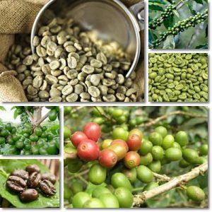 Proprietà e benefici caffè verde