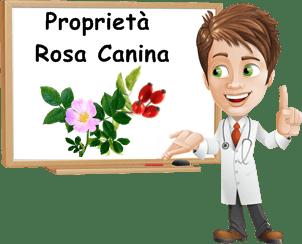 Proprietà Rosa canina