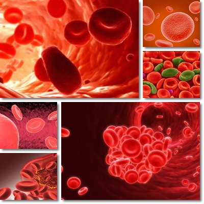 Combattere l'anemia con gli alimenti ricchi di ferro
