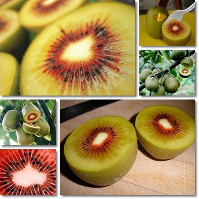 Proprietà e benefici Kiwi Rosso