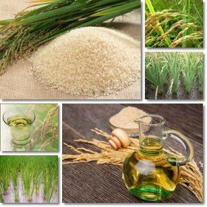 Proprietà e benefici Olio di riso