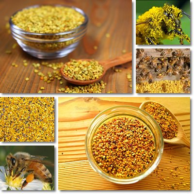 Proprietà e benefici Polline d'api