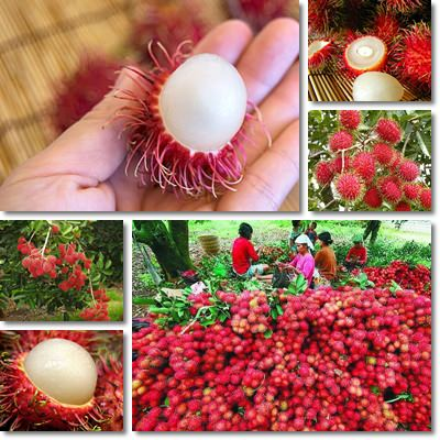 Proprietà e benefici Rambutan