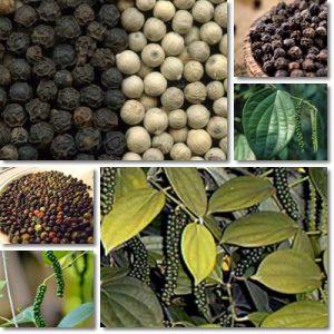 Piperina: benefici, controindicazioni ed effetti collaterali