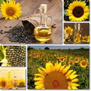 Proprietà e benefici Olio di semi di girasole